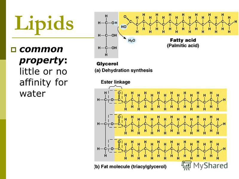 Lipids common property: little or no affinity for water