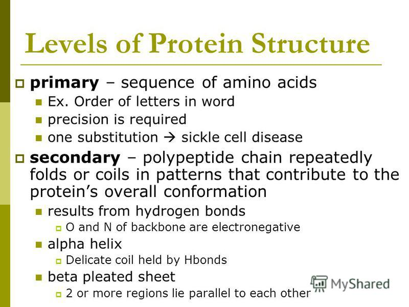 Levels of Protein Structure primary – sequence of amino acids Ex. Order of letters in word precision is required one substitution sickle cell disease secondary – polypeptide chain repeatedly folds or coils in patterns that contribute to the proteins