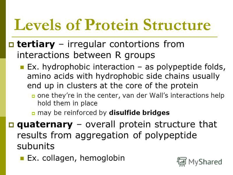 Levels of Protein Structure tertiary – irregular contortions from interactions between R groups Ex. hydrophobic interaction – as polypeptide folds, amino acids with hydrophobic side chains usually end up in clusters at the core of the protein one the