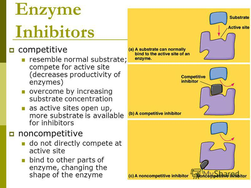 Enzyme Inhibitors competitive resemble normal substrate; compete for active site (decreases productivity of enzymes) overcome by increasing substrate concentration as active sites open up, more substrate is available for inhibitors noncompetitive do