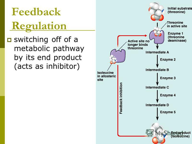 Feedback Regulation switching off of a metabolic pathway by its end product (acts as inhibitor)