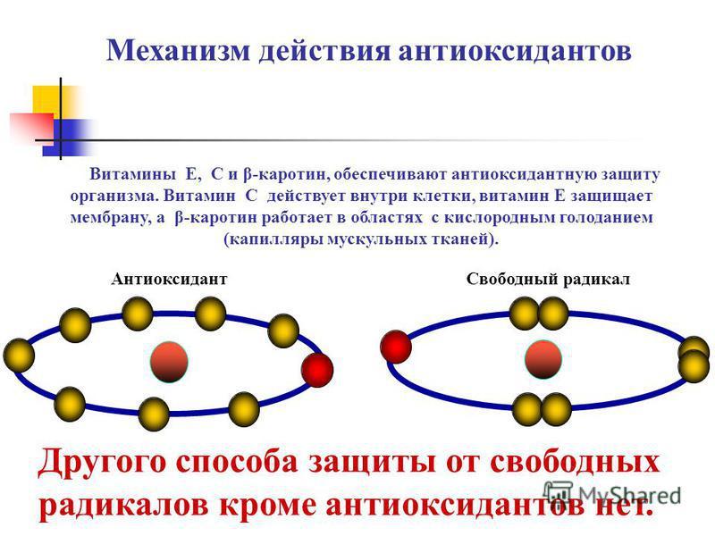 Свободный радикал Антиоксидант Механизм действия антиоксидантов Другого способа защиты от свободных радикалов кроме антиоксидантов нет. Витамины Е, С и β-каротин, обеспечивают антиоксидантную защиту организма. Витамин С действует внутри клетки, витам