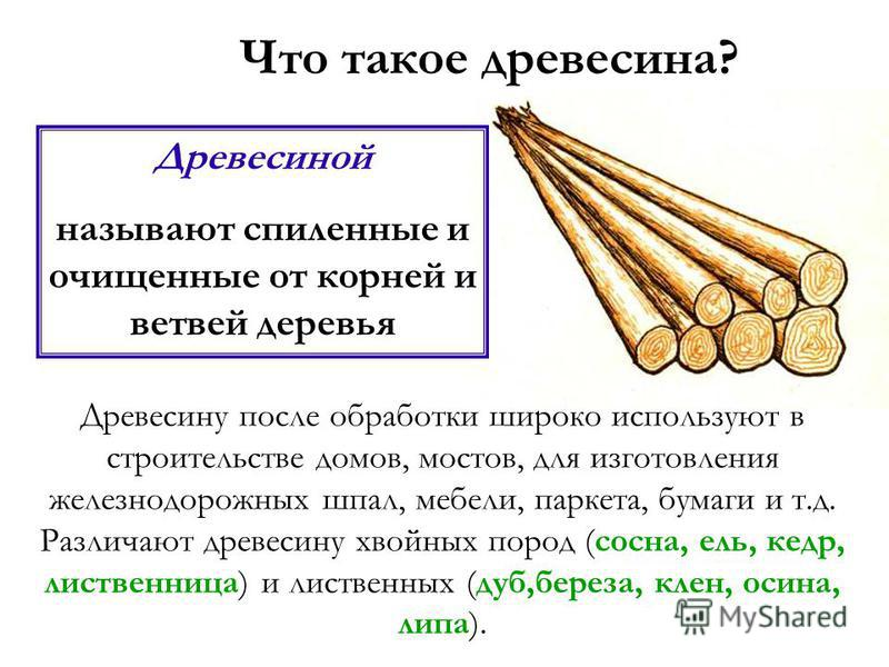 Строение дерева Какими бы разнообразными ни были деревья, все они имеют одинаковое строение. Каждое дерево состоит из трех частей корней, ствола и кроны