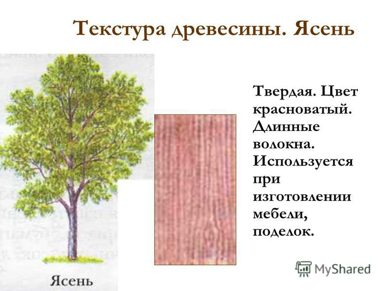 Текстура древесины. Бук. Твердая. Цвет красноватый. Мелкие короткие волокна. Применяется для изготовления мебели, фанеры, ручек для инструмента