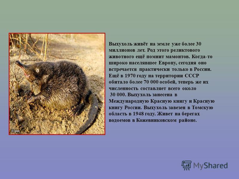 Выхухоль живёт на земле уже более 30 миллионов лет. Род этого реликтового животного ещё помнит мамонтов. Когда-то широко населявшее Европу, сегодня оно встречается практически только в России. Ещё в 1970 году на территории СССР обитало более 70 000 о