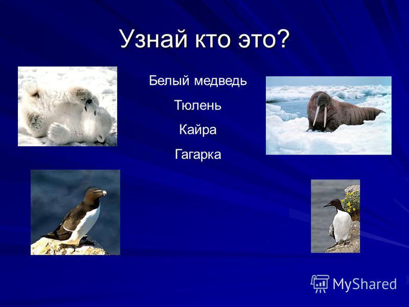 Узнай кто это? Белый медведь Тюлень Кайра Гагарка