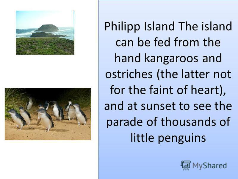 Philipp Island The island can be fed from the hand kangaroos and ostriches (the latter not for the faint of heart), and at sunset to see the parade of thousands of little penguins