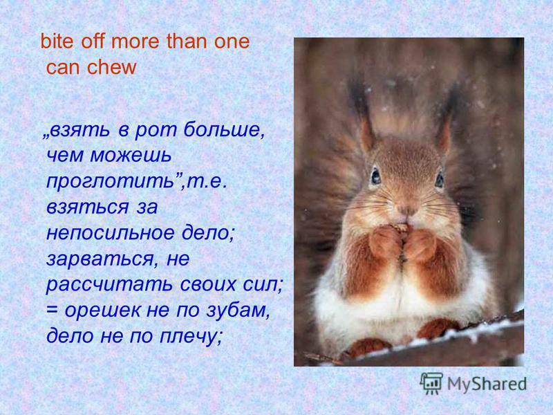 bite off more than one can chew взять в рот больше, чем можешь проглотить,т.е. взяться за непосильное дело; зарваться, не рассчитать своих сил; = орешек не по зубам, дело не по плечу;