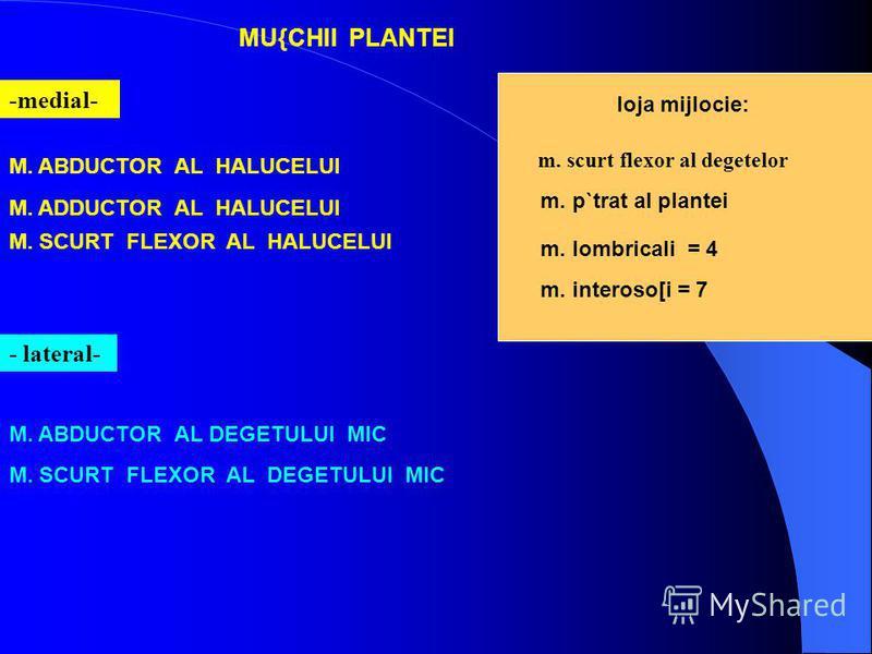 MU{CHII PLANTEI -medial- M. ABDUCTOR AL HALUCELUI M. ADDUCTOR AL HALUCELUI M. SCURT FLEXOR AL HALUCELUI - lateral- M. ABDUCTOR AL DEGETULUI MIC M. SCURT FLEXOR AL DEGETULUI MIC loja mijlocie: m. scurt flexor al degetelor m. p`trat al plantei m. lombr