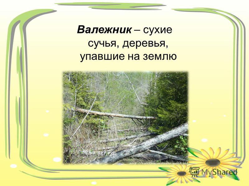 Валежник – сухие сучья, деревья, упавшие на землю