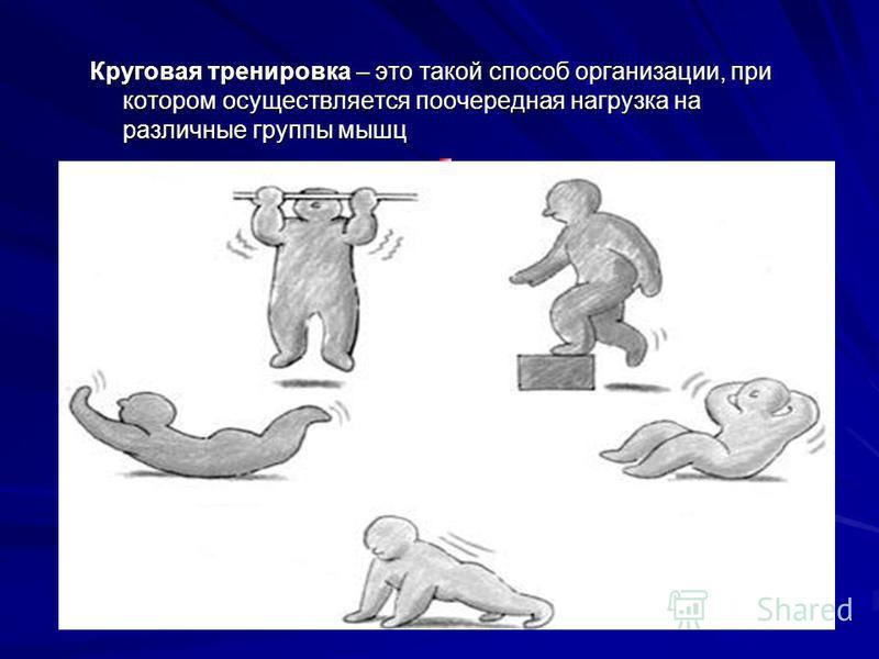 Круговая тренировка – это такой способ организации, при котором осуществляется поочередная нагрузка на различные группы мышц