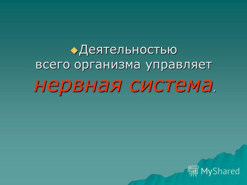 Деятельностью Деятельностью всего организма управляет нервная система. нервная система.