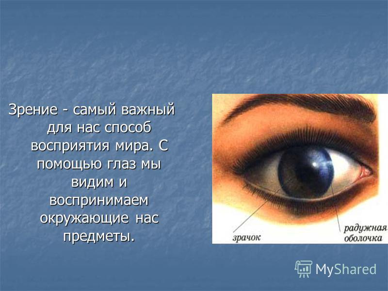 Зрение - самый важный для нас способ восприятия мира. С помощью глаз мы видим и воспринимаем окружающие нас предметы.