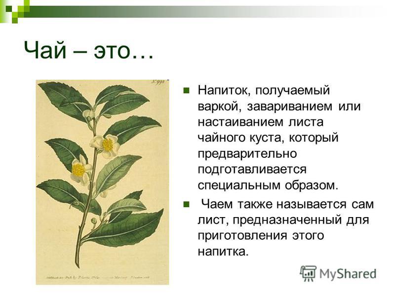 Чай – это… Напиток, получаемый варкой, завариванием или настаиванием листа чайного куста, который предварительно подготавливается специальным образом. Чаем также называется сам лист, предназначенный для приготовления этого напитка.