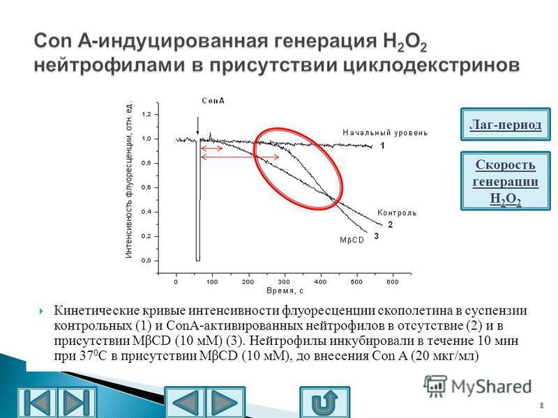 8 Кинетические кривые интенсивности флуоресценции скополетина в суспензии контрольных (1) и ConA-активированных нейтрофилов в отсутствие (2) и в присутствии MβCD (10 мМ) (3). Нейтрофилы инкубировали в течение 10 мин при 37 0 С в присутствии MβCD (10