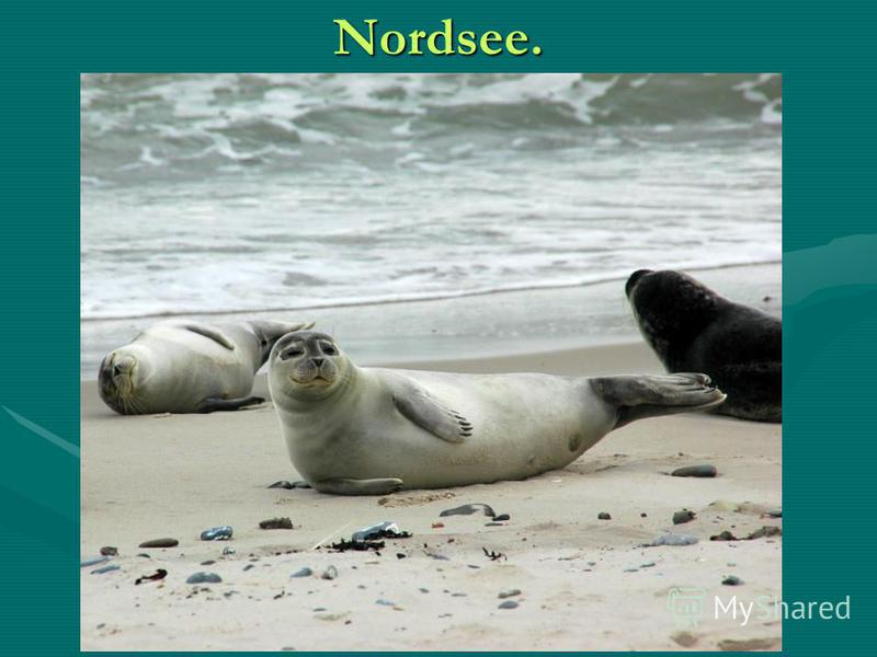 Nordsee.