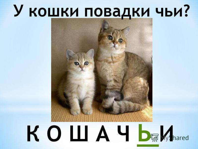 У кошки повадки чьи? К О Ш А Ч Ь И