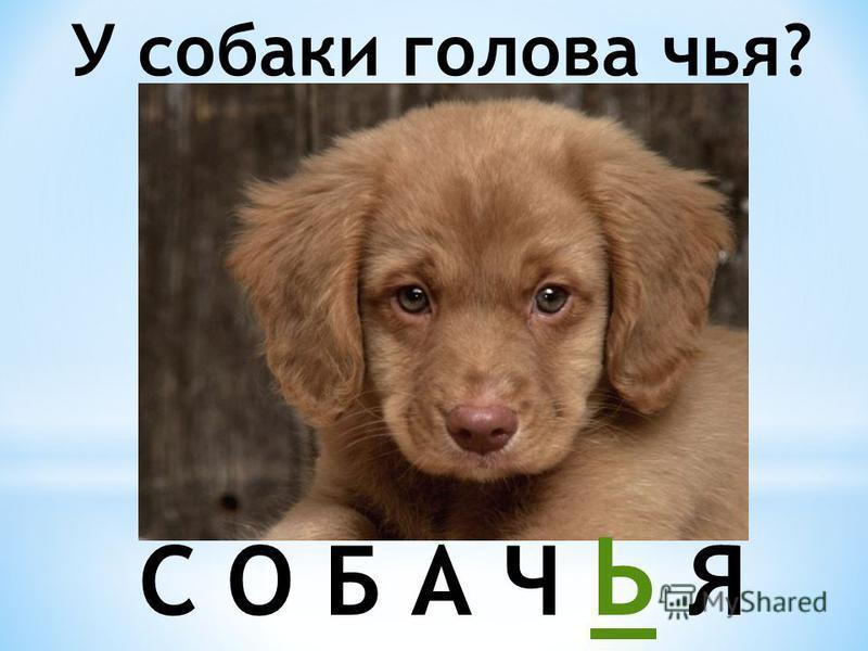 У собаки голова чья? С О Б А Ч Ь Я