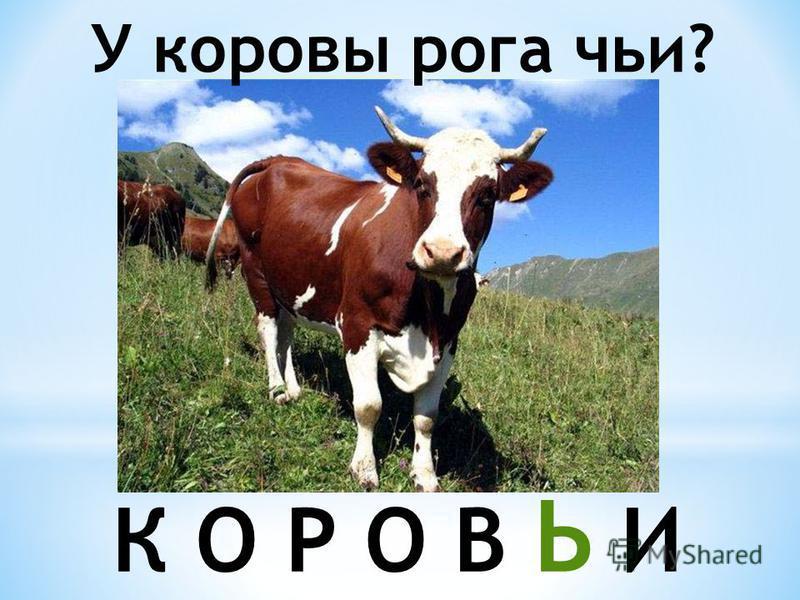 У коровы рога чьи? К О Р О В Ь И