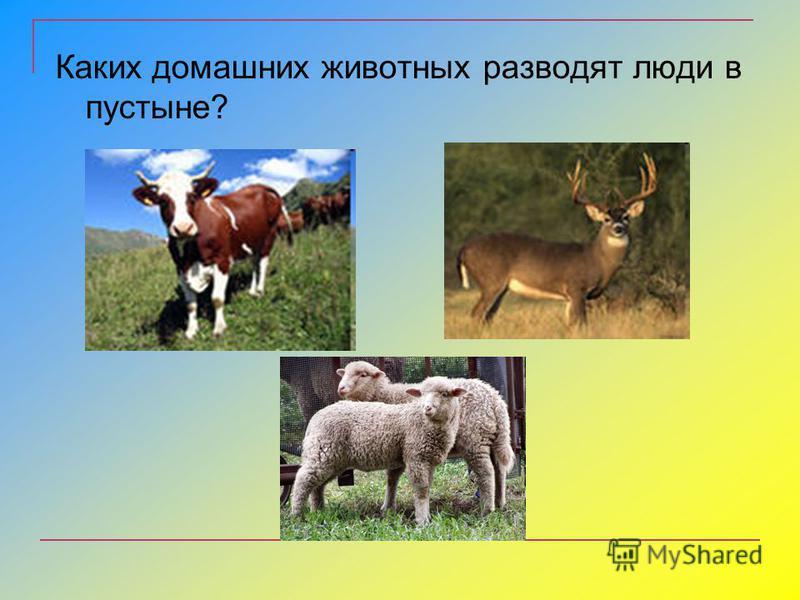 Каких домашних животных разводят люди в пустыне?