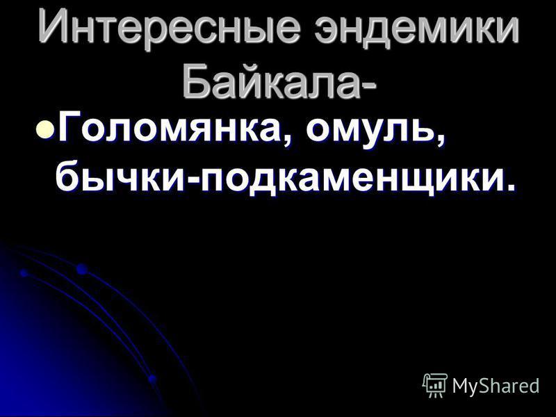 Интересные эндемики Байкала- Голомянка, омуль, бычки-подкаменщики. Голомянка, омуль, бычки-подкаменщики.