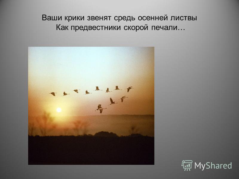 Ваши крики звенят средь осенней листвы Как предвестники скорой печали…