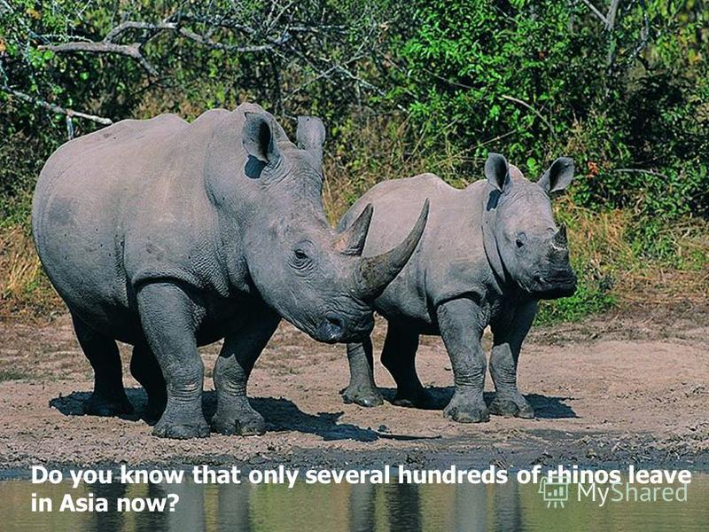 Do you know that only several hundreds of rhinos leave in Asia now?