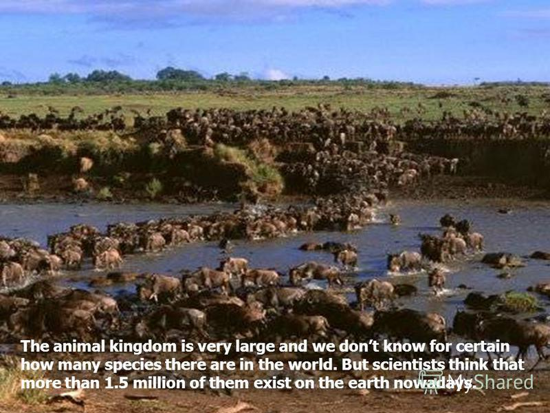 The animal kingdom is very large and we dont know for certain how many species there are in the world. But scientists think that more than 1.5 million of them exist on the earth nowadays.