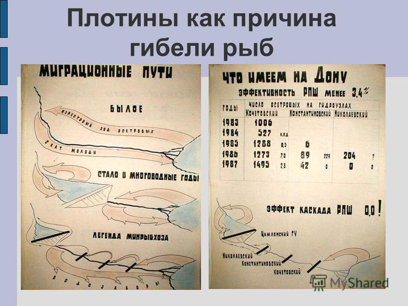 Плотины как причина гибели рыб