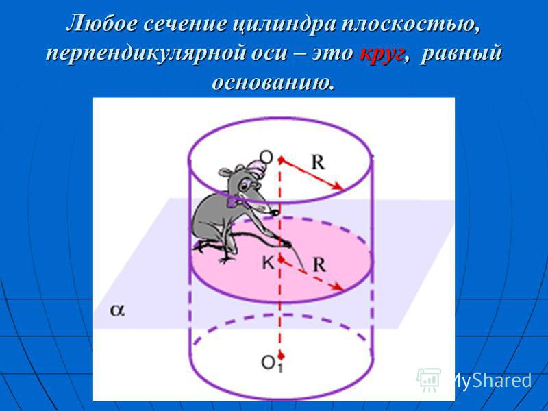 Любое сечение цилиндра плоскостью, перпендикулярной оси – это круг, равный основанию.