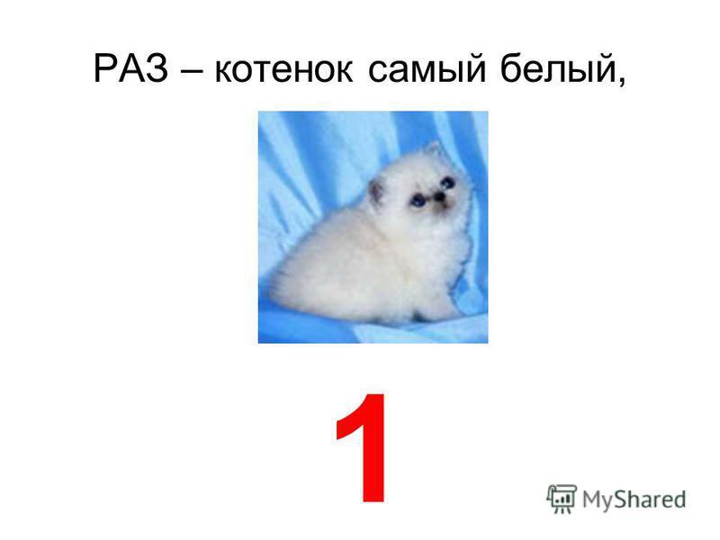 РАЗ – котенок самый белый, 1