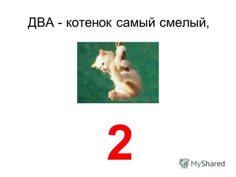 ДВА котенок самый смелый, 2
