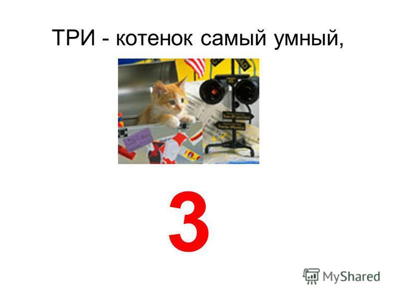 ТРИ котенок самый умный, 3