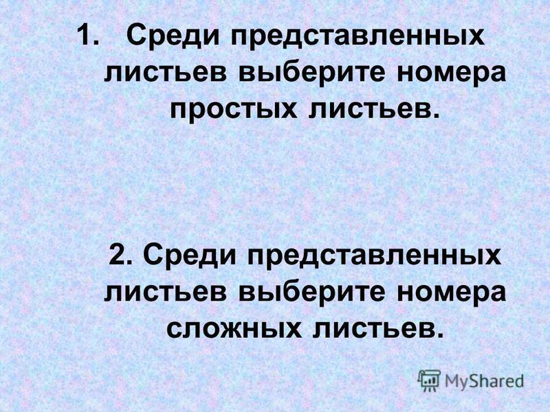 1. Среди представленных листьев выберите номера простых листьев. 2. Среди представленных листьев выберите номера сложных листьев.