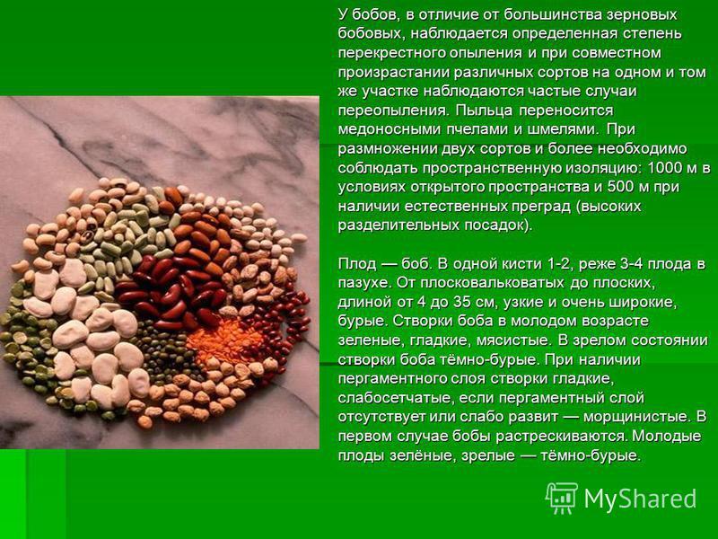 У бобов, в отличие от большинства зерновых бобовых, наблюдается определенная степень перекрестного опыления и при совместном произрастании различных сортов на одном и том же участке наблюдаются частые случаи переопыления. Пыльца переносится медоносны