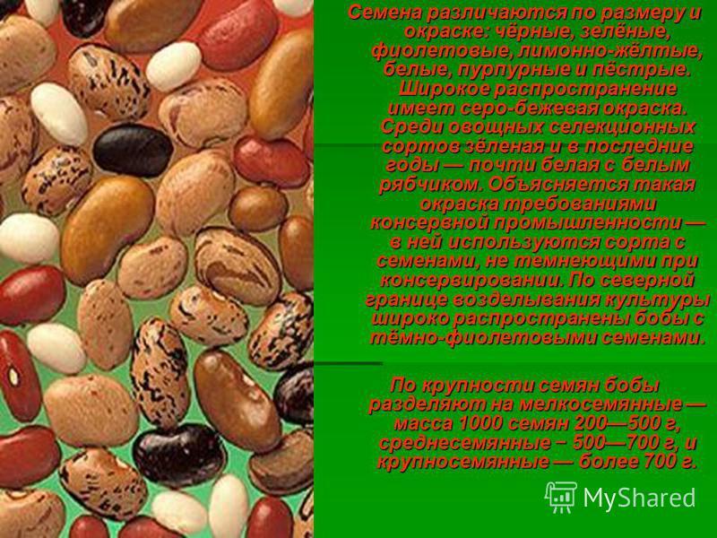 Семена различаются по размеру и окраске: чёрные, зелёные, фиолетовые, лимонно-жёлтые, белые, пурпурные и пёстрые. Широкое распространение имеет серо-бежевая окраска. Среди овощных селекционных сортов зёленая и в последние годы почти белая с белым ряб