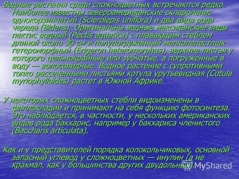 Водные растения среди сложноцветных встречаются редко. Наиболее известны североамериканские склеролепис однокорзинчатый (Sclerolepis uniflora) и два вида рода череда (Bidens). Оригинальны водные мексиканские виды пектис водный (Pectis aquatica) с пла