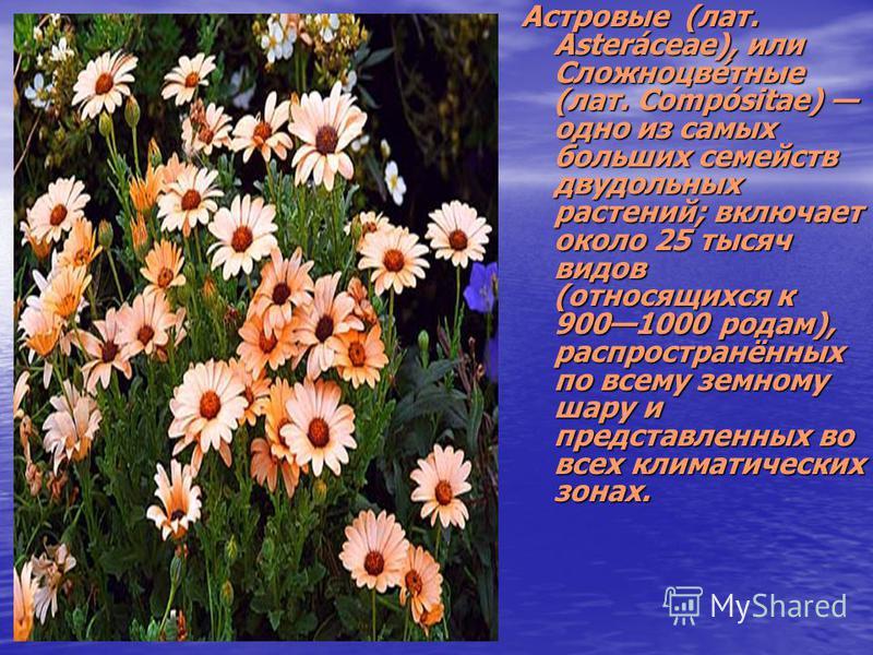 Астровые (лат. Asteráceae), или Сложноцве́тные (лат. Compósitae) одно из самых больших семейств двудольных растений; включает около 25 тысяч видов (относящихся к 9001000 родам), распространённых по всему земному шару и представленных во всех климатич