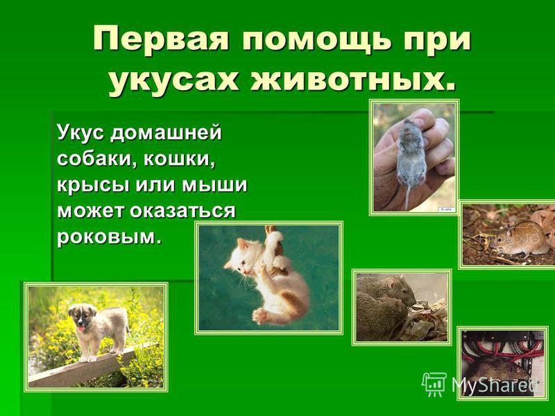 Первая помощь при укусах животных. Укус домашней собаки, кошки, крысы или мыши может оказаться роковым.