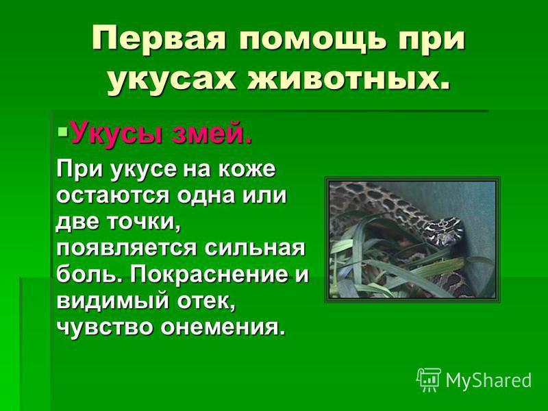 Первая помощь при укусах животных. Укусы змей. При укусе на коже остаются одна или две точки, появляется сильная боль. Покраснение и видимый отек, чувство онемения.