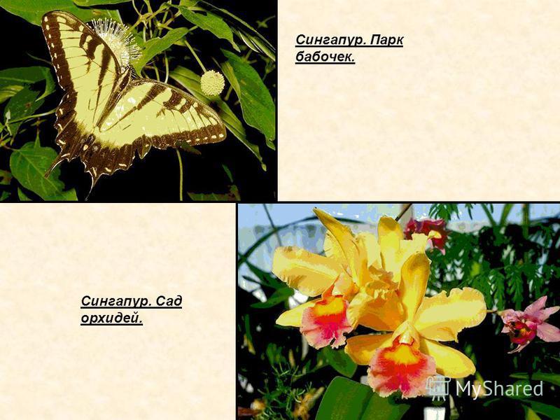 Сингапур. Парк бабочек. Сингапур. Сад орхидей.
