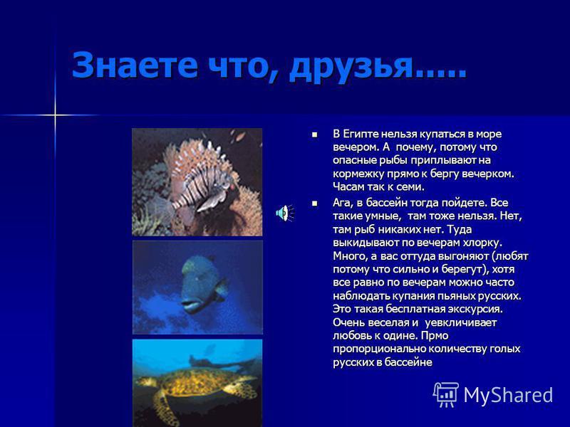Знаете что, друзья..... В Египте нельзя купаться в море вечером. А почему, потому что опасные рыбы приплывают на кормежку прямо к бергу вечерком. Часам так к семи. В Египте нельзя купаться в море вечером. А почему, потому что опасные рыбы приплывают