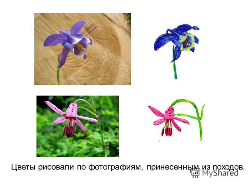 Цветы рисовали по фотографиям, принесенным из походов.