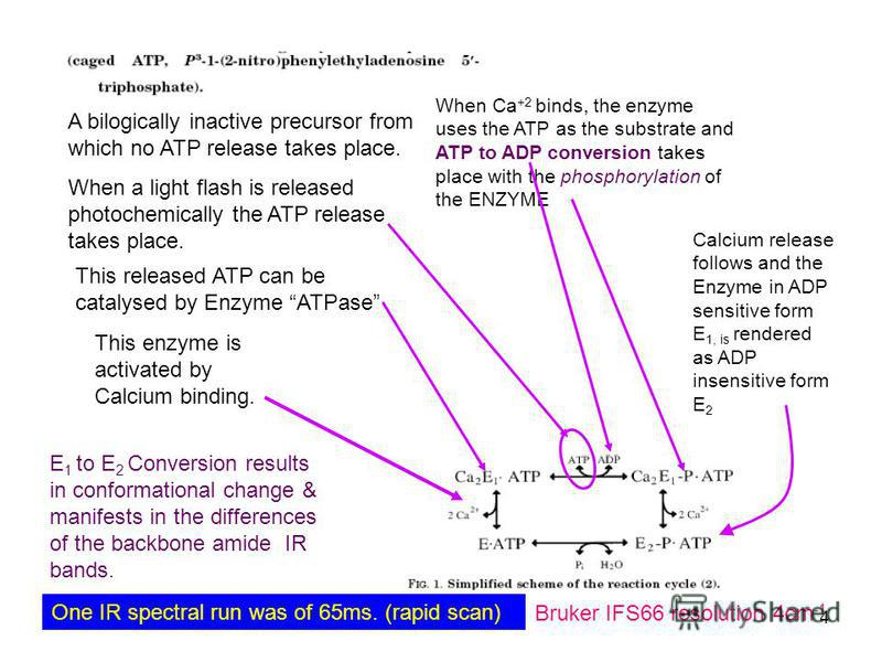 July 23, 2015Refresher Course4 A bilogically inactive precursor from which no ATP release takes place. When a light flash is released photochemically the ATP release takes place. This released ATP can be catalysed by Enzyme ATPase When Ca +2 binds, t