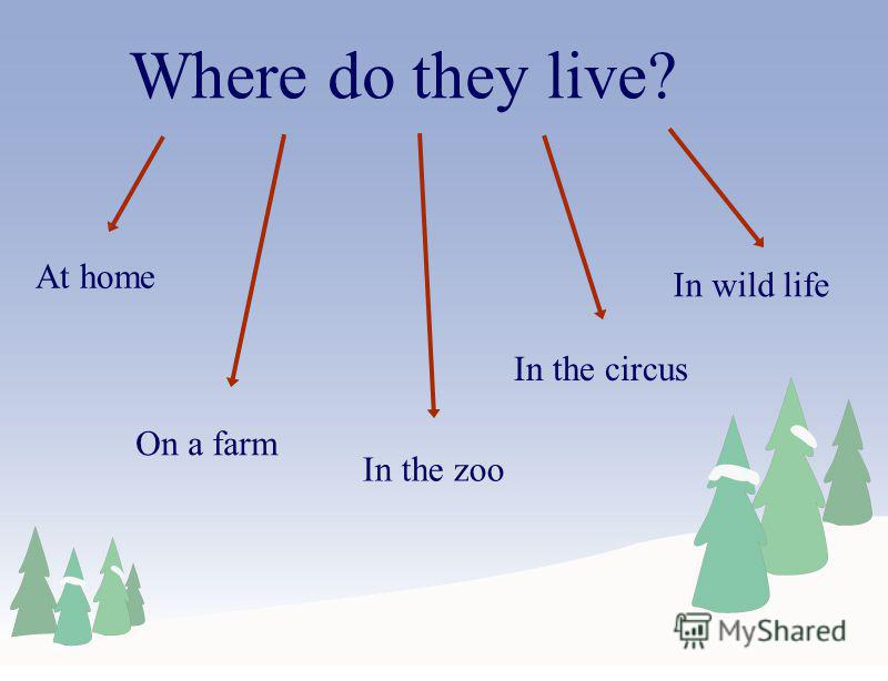 Where do they live? At home On a farm In the zoo In the circus In wild life