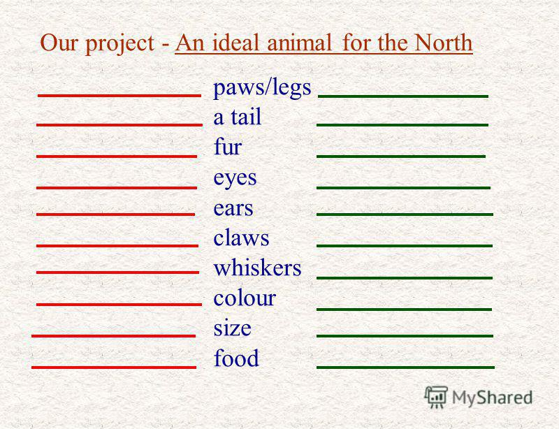 Our project - An ideal animal for the North paws/legs a tail fur eyes ears claws whiskers colour size food