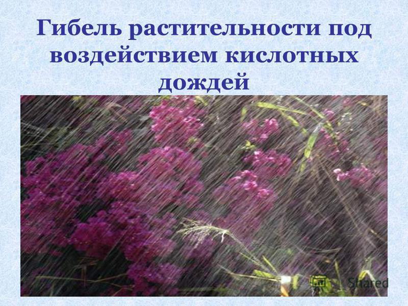 Гибель растительности под воздействием кислотных дождей