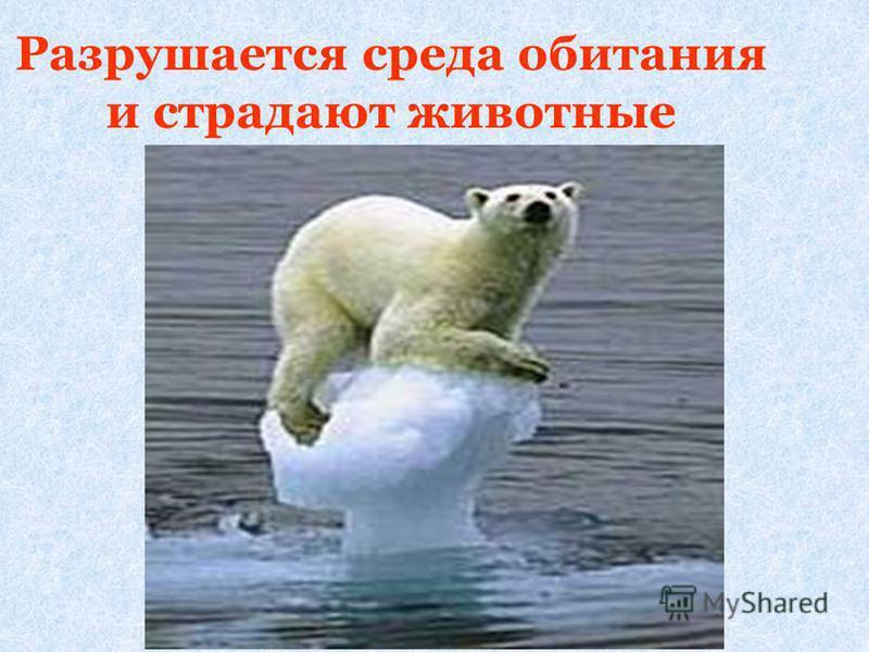 Разрушается среда обитания и страдают животные