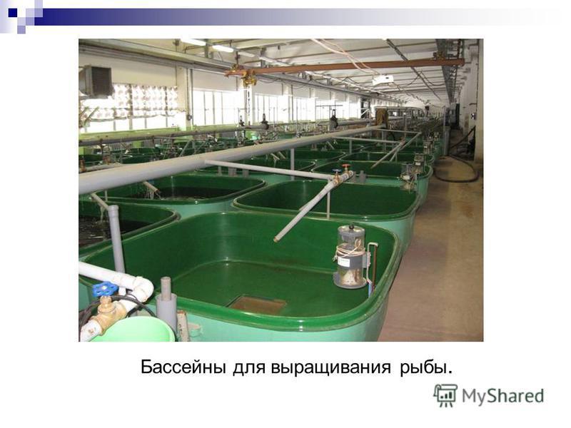 Бассейны для выращивания рыбы.