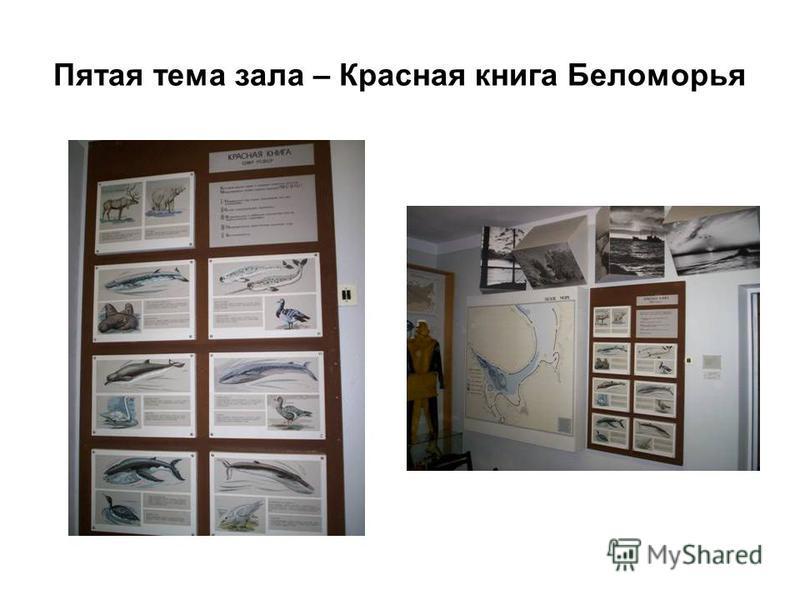 Пятая тема зала – Красная книга Беломорья